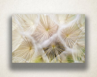 Dandelion Close Up Canvas Art, Dandelion Wall Art, White Canvas Print, Close Up Wall Art, Photograph, Canvas Print, Home Art, Wall Art
