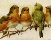 Birds on a Branch vintage digital art graphic image