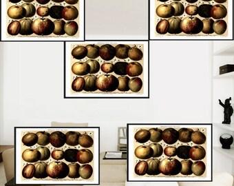 Instant Digital download of Of Digital printable Apples Wall art   digital printable art.