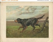 SALE Vintage - Vero Shaw - Antique Dog Print - Setter - Original Chromolithograph  - 1881 Book Of The Dog