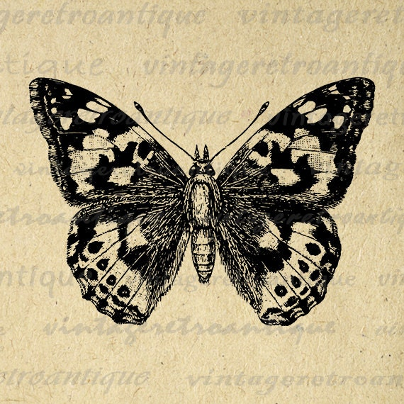 Painted-Lady Butterfly Graphic Digital by VintageRetroAntique