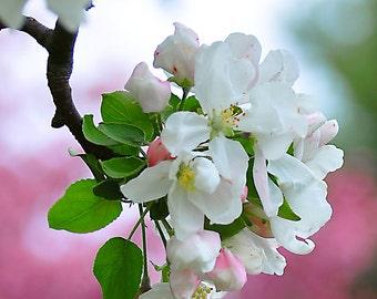 Apple Blossom Photo, Pink Wall Art, Spring Blossom Print, Fine Art Wall Hangings, Home Decor, Flower Prints