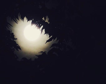 Nature Photography, Moon Photography, Sky, Leaves, Dark, fPOE, Moon Fire