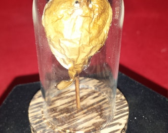 Real Taxidermy Brown Electric StingRay Glass dome display/Nautical-Ocean-Ray-aquatic