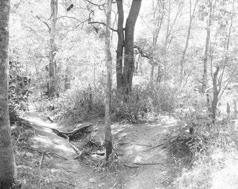 Preserve Photography - Landscape, Trees, Nature, City, Texas, Wall Art, Print, Canvas