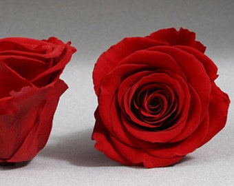Preserved*Red Roses, Preserved  Roses, Roses for Bouquet, Prom Roses, Preserved Rose Bouquet  Simply Beautiful !