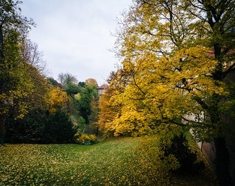 Autumn color and a hill in Malá Strana, Prague, Czech Republic - Photography Fine Art Print or Wrapped Canvas