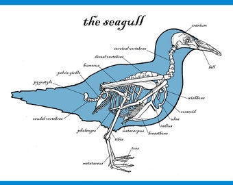 The Seagull Greetings Card