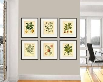 Kitchen Herbs Wall Art Antique Botanical Print Set Of 6 Herb Art Print  Kitchen Poster Kitchen