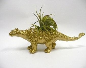 Gold Ankylosaurus Dinosaur Planter with Air Plant