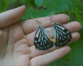 Malayan Zebra Butterfly Earrings