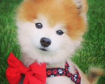 The Jake // Dog Harness & Bow Tie - Dog Harness, Easy on harness, summer dog harness, cute harness, cute dog harness, paw print harness