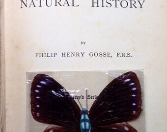 Butterfly specimen 1900's...