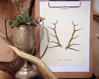 American stag print