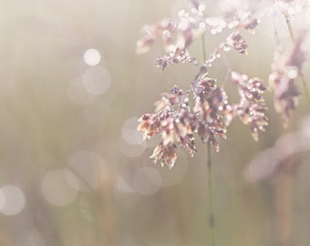 Morning Dew Color Photo Print { sunlight, sunshine, sparkle, shimmer, flare, white, brown, wall art, macro, nature & fine art photography }