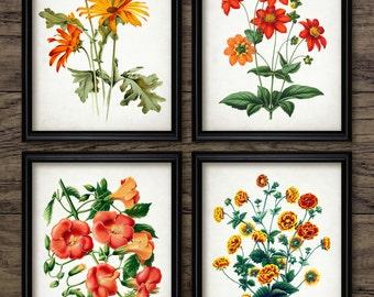Red And Orange Flower Print Set of 4 - Botanical Print - Red And Orange Decor - Floral Decor - Set Of Four Prints #1965 - INSTANT DOWNLOAD