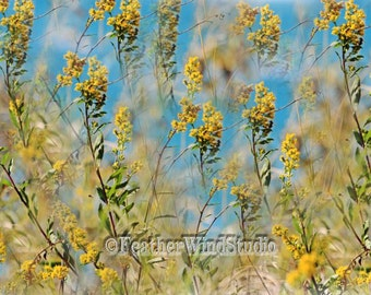Goldenrod Abstract Flower Photography | Yellow Gold Blue Flora Photo | Feminine Home Decor | Lake Flower Print | Summer | FeatherWindStudio