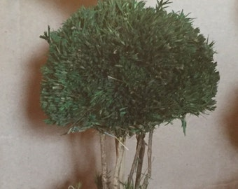 Preserved Topiary in Ceramic Pot~Choice~3 styles