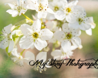 Flower Print, Nature Photography