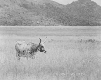 Black and white longhorn cow print Home Decor Fine Art Photography 8x10 print Longhorn Cow art Oklahoma photography cattle art