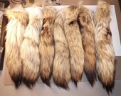 1 Coyote Tail - 16 inch Tail -  Animal Parts - Natural Supplies for Crafts - Rendezvous - Pow Wows - Mountain Man - also called a Brush Wolf