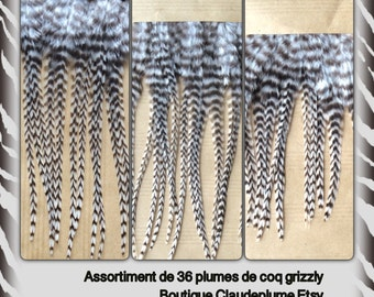 Assortment of 36 natural cock grizzly feathers