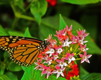 butterfly on flower photograph