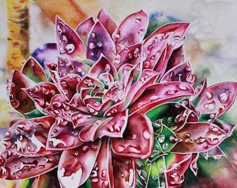 Gorgeous Succulent Watercolor Print