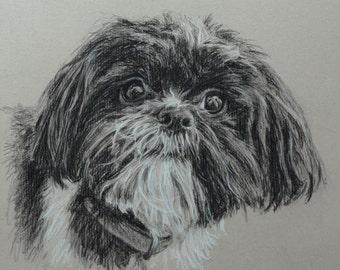 Custom Dog portrait, Pet portrait, Dog drawing, Dog Art, Shih Tzu - carbon pencil on Ingres paper  ***Lowest price is 50% DEPOSIT price***