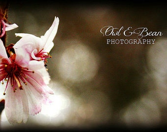 Pink Cherry Blossom with Bokeh Lights, Paper Goods, Handmade Greeting Card, Blank  Inside, Fine Art Photography, 4 x 6 card
