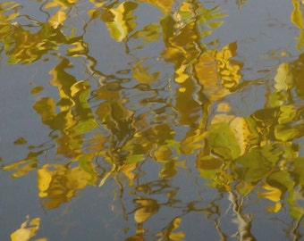 loosenedleaves: reflections on water