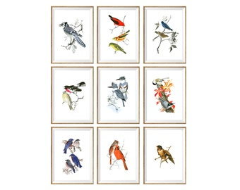 Birds Art Print SET of 9. Bird poster, bird prints, bird pictures, botanical bird prints, bird art, birds wall art, birds wall decor