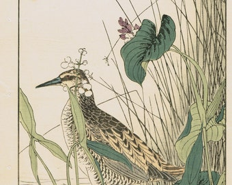 "Japanese Antique Original Woodcut Print, Imao Keinen, "" Monochoria korsakowii, Arrowhead, Water rail"""
