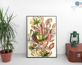 Tropical Pitcher Plants (Nepenthes) Print (Botany Illustration) Various Sizes by Ernst Haeckel