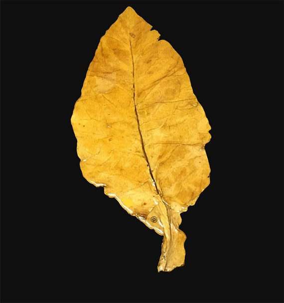 tobacco leaf Magnificently embellished with 27 colors and hand-painted 22-karat gold, tobacco leaf was the 18th century's most coveted pattern and still looks bold and brilliant today.