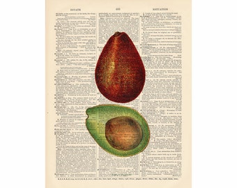 AVACADO BOTANICAL Print -- Recycled Upcycled Dictionary Art  Print  3056