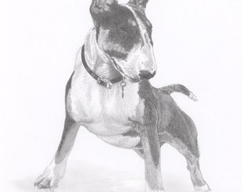 BULL TERRIER (2) dog Limited Edition art drawing print signed by UK artist