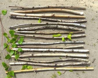20 White Birch Branches,Birch sticks, Birch Log,Craft Supply,Woodworking  Supply