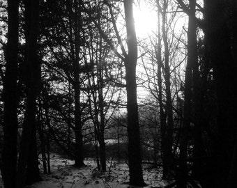 "Beyond The Trees Print (12""x8"")"