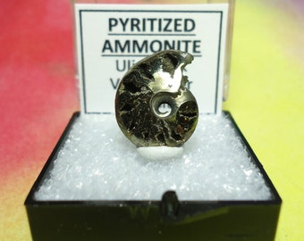 PYRITIZED AMMONITE Natural Polished Druzy Fossil In Perky Specimen Box From Russia Rare