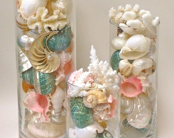 Beach Decor Seashells Coral And Starfish In Glass Cylinders 8 12