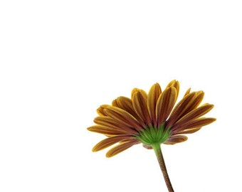 Yellow Daisy, Floral Decor, Flower Photography, Green, Minimalism, 8X10 Mat, Ready to Frame