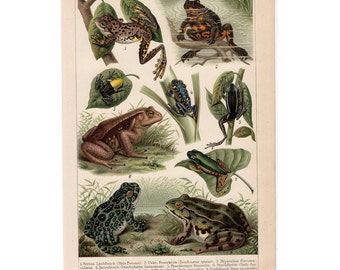 1889 ANTIQUE FROG & TOAD lithograph original antique reptile animal print of frogs