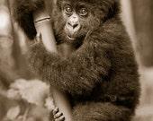 CUTE BABY GORILLA Photo, ...