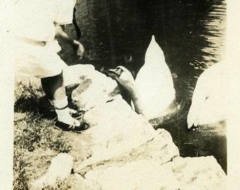 "Vintage Photo ""Feeding Feathers"" Snapshot Photo Old Antique Photo Black & White Photograph Found Photo Paper Ephemera Vernacular - 196"