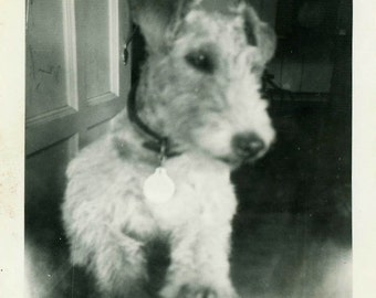 "Vintage Photo ""Cuddle Puppy"" Snapshot Photo Old Antique Photo Black & White Photograph Found Photo Paper Ephemera Vernacular - 164"