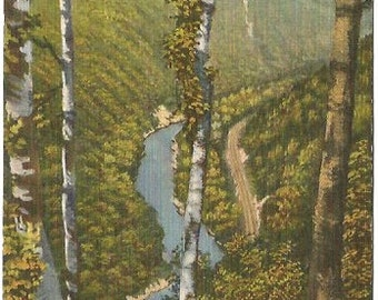 Pennsylvania's Grand Canyon Looking North from the Turkey Path at Harrison State Park Linen Post card Vintage Postcard
