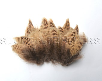 Small feather natural striped brown real Ringneck Pheasant feathers for millinery, crafts, jewelry, boutonnieres, fishing, strung / F175-2