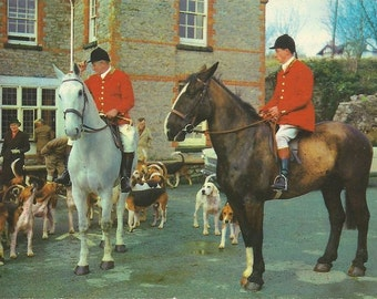 To the Hounds - Vintage 1960s Foxhunt Riders Horses and Hounds Photo Postcard
