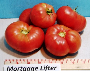 Mortgage Lifter Tomato Seeds Heirloom  Non GMO